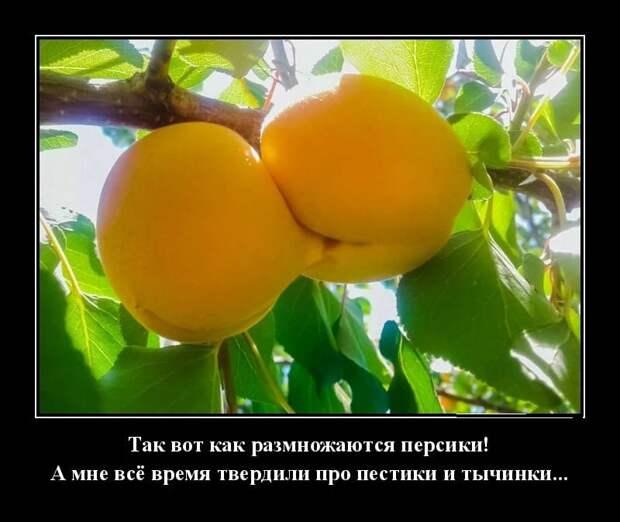 Как отличить гриб от ягоды? - Попробуйте его сварить...