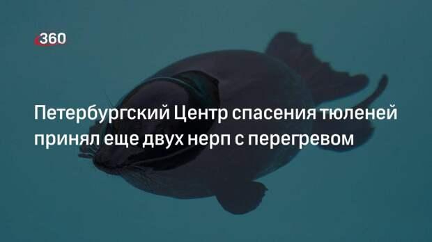 Петербургский Центр спасения тюленей принял еще двух нерп с перегревом