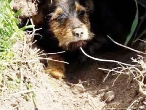 Пара заметила пса, сидевшего в трубе. Почему-то бедняга грустно лежал и не мог выбраться наружу