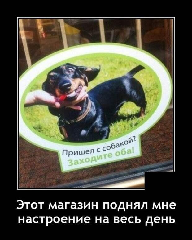 Демотиватор про собаку и магазин