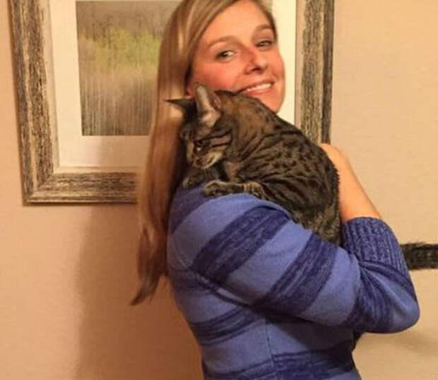 Несколько месяцев Кристин ждала разрешения на вывоз животного и заплатила 2000$ за ее перелет  афганистан, животные, кошка