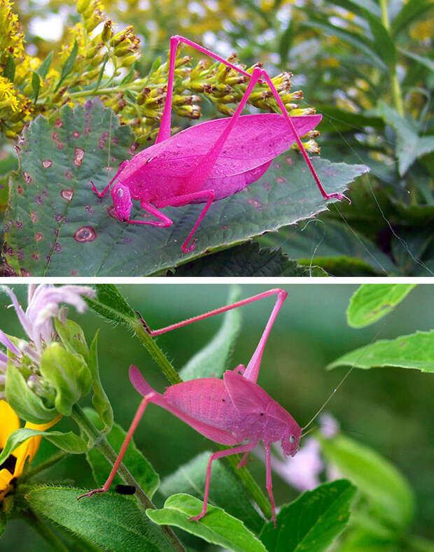 Природа - лучший художник: 40 животных неожиданной расцветки - 4