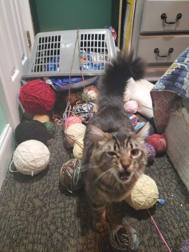 кот и нитки