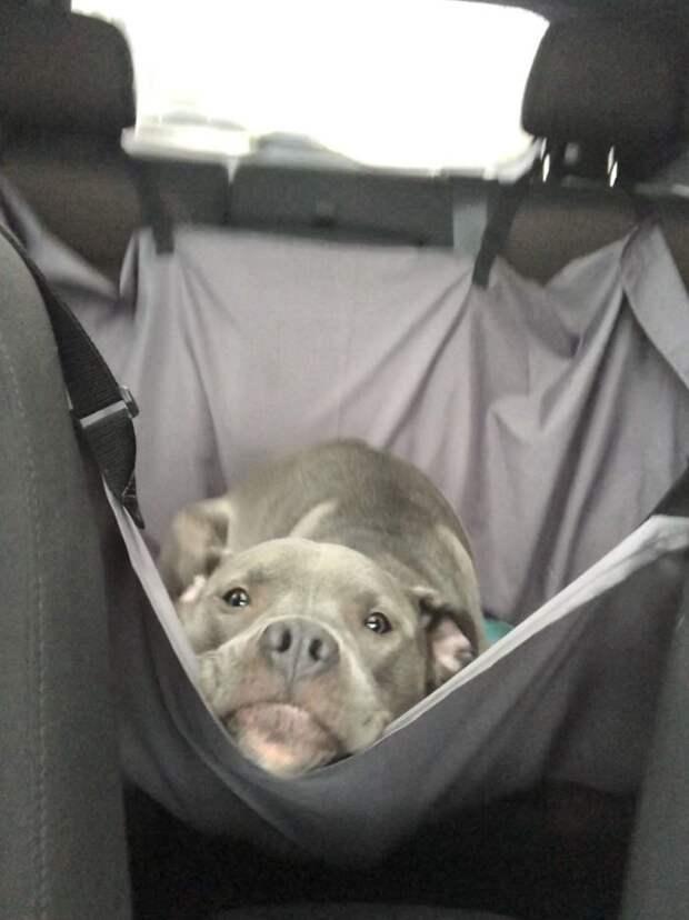 10 угарных фото собак, которые кайфуют от поездки на машине