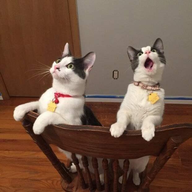 12. Увидели, как работает потолочный вентилятор домашние питомцы, забавные животные, кошки забавное, кошки и собаки, морды, реакция, смешные животные, собаки и кошки