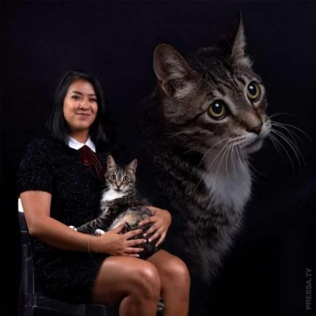 болельщики специалисты фотосессия для домашних животных сша сих