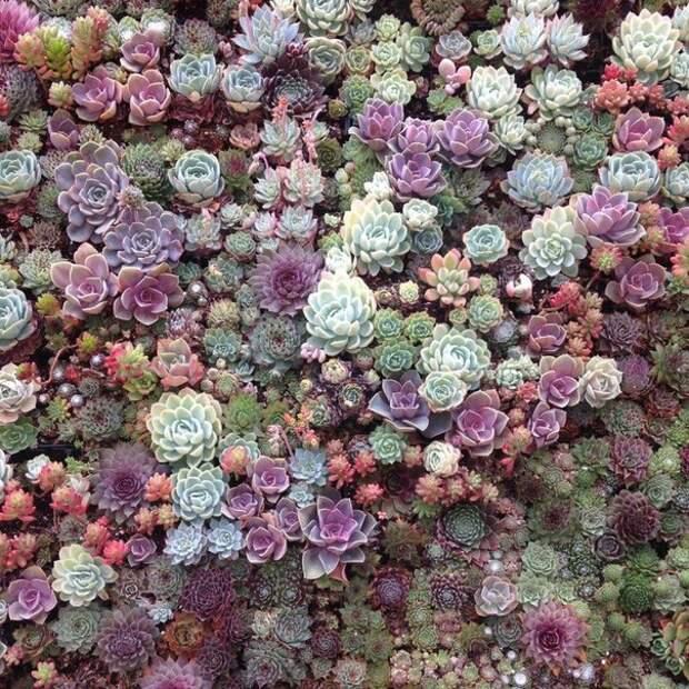 Чудные растения суккуленты...