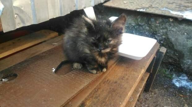 Девушка пожалела бездомного котёнка с подкожным клещом и бросилась его спасать, рискуя заразить своих котов