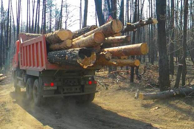 вывоз леса срубленного