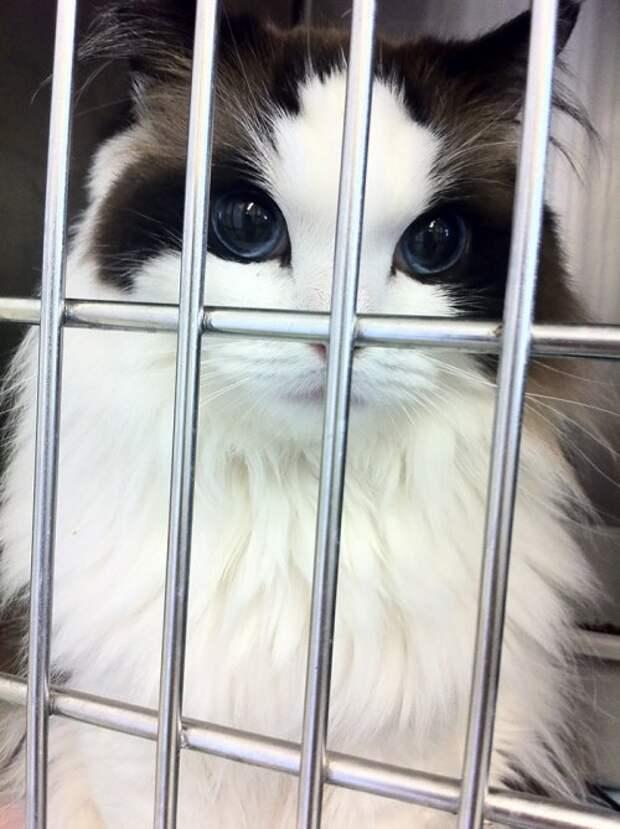 Самые красивые кошки в мире (27 фото)