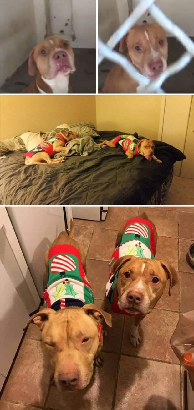 Два брата-пса прожили раздельно в приюте 118 дней, но все-таки нашли общий дом Счастливый конец, животные, спасение