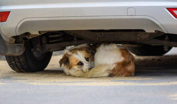 Повешенная собака найдена влесу под Березовским