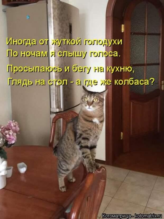 Котоматрица. Свежак (27 фото)
