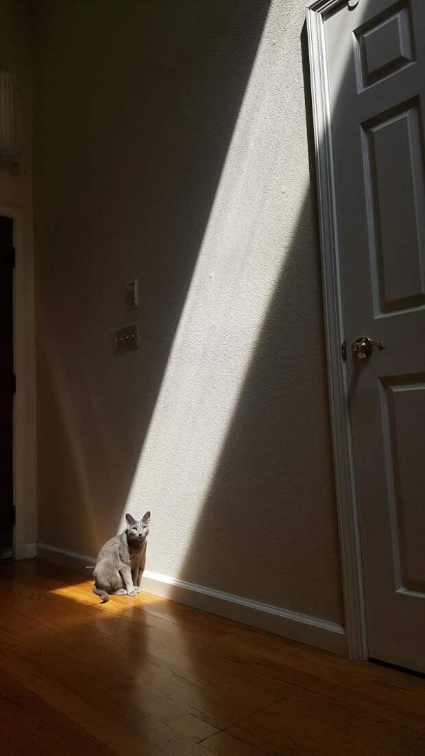 Слава Солнцу! животные, котики, лучи, погреться, солнечные ванны, солнце, температура, тепло