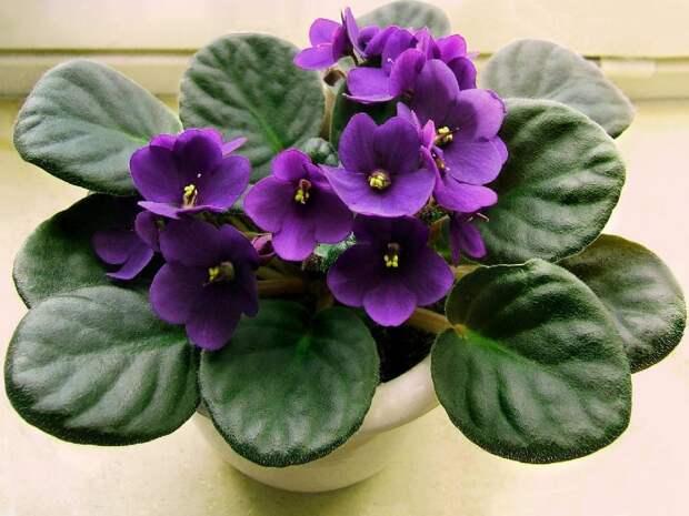 5 необычных подкормок для комнатных растений!