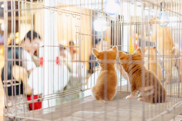 Продажа животных на рынках и в зоомагазинах окажется вне закона