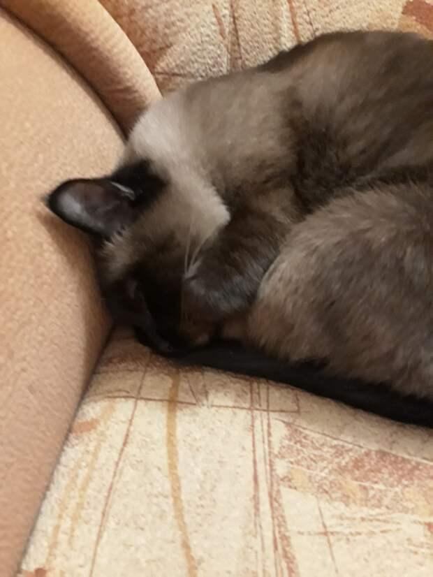 У меня потерялась кошка...(((