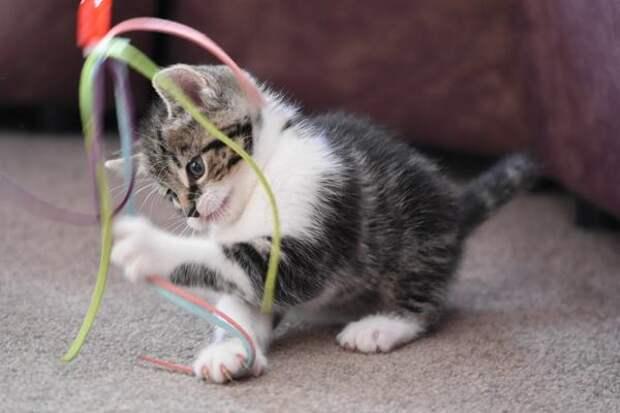 Игрушки для кошек своими руками: 8 идей для усатых и полосатых