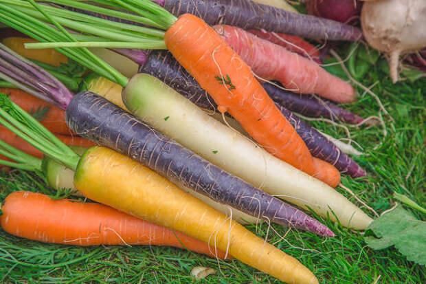 Оригинальные сорта моркови