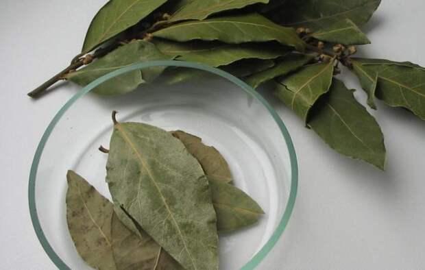 10 рецептов лечения лавром листом. Всегда есть на кухне ценное лекарство!