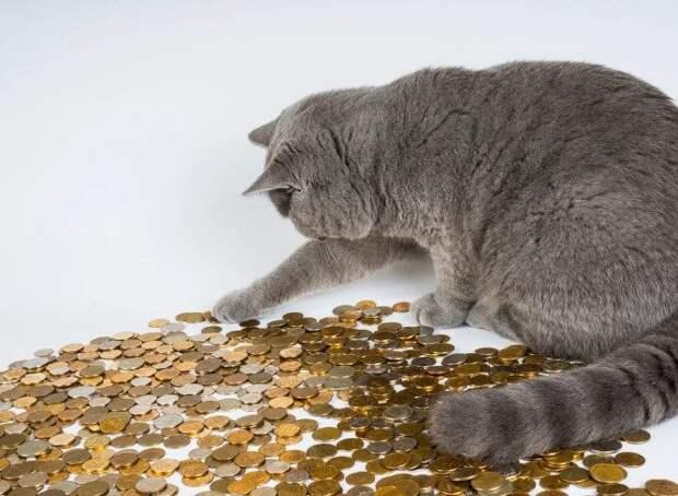 10 денежных примет, связанных с кошками