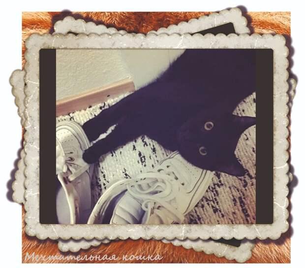 КотоПозитив - забавные котики для хорошего настроения