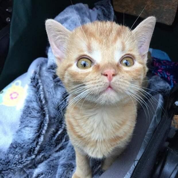 Необычный котенок