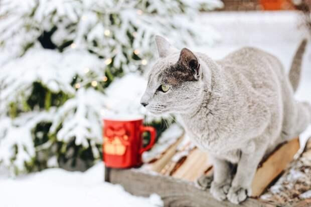 В четверг в Удмуртии начнется похолодание