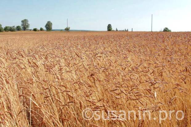 В Удмуртии научат превращать сельхозпродукцию в деньги