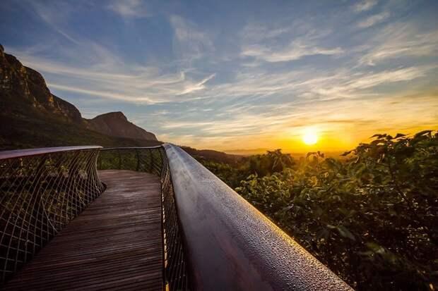 ЭКСКУРСИОН. Дорога над верхушками деревьев (Кейптаун, ЮАР)