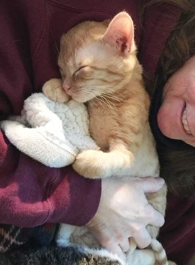 Котенок и женина