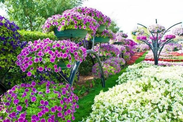 САД, ЦВЕТНИК И ОГОРОД. Формула обильного цветения петунии