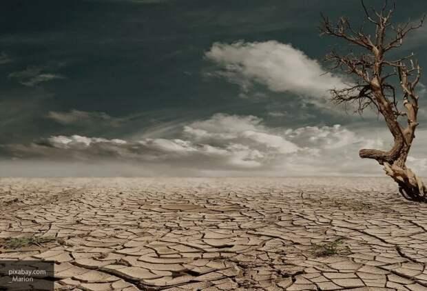 10 лет засухи: эколог Соколенко считает, что Украина может превратиться в пустыню