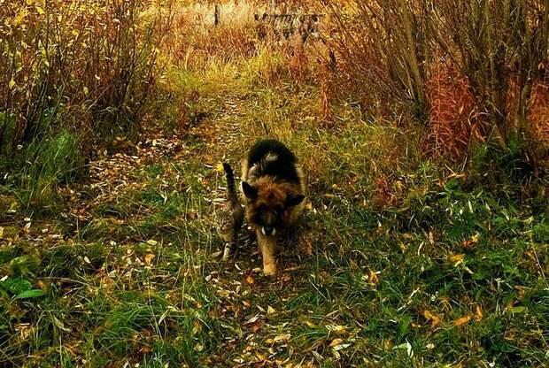 Прогулки по лесу - любимое занятие пушистых друзей