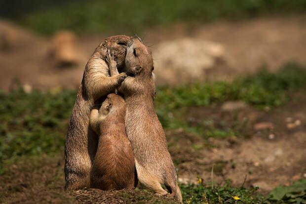 animal-parents-10