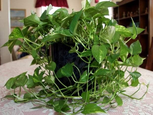комнатные растения моего дома