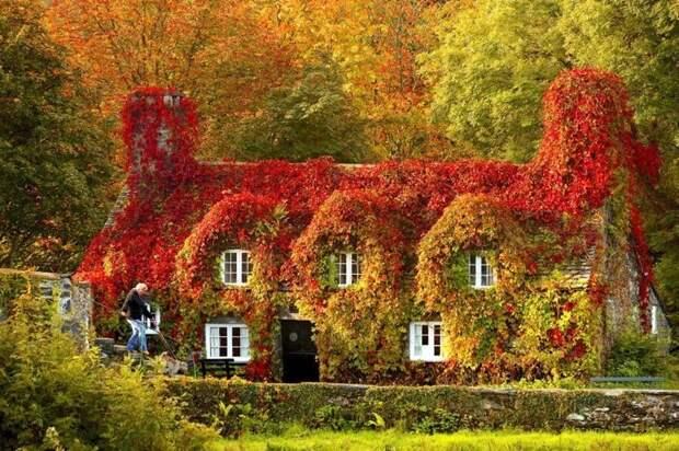 Нравится вам такое буйство? Зелены, Фабрика идей, дом, красота, перебор, садоводы, цветы