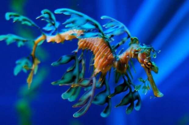 ТОП-25: Самые странные животные на Земле