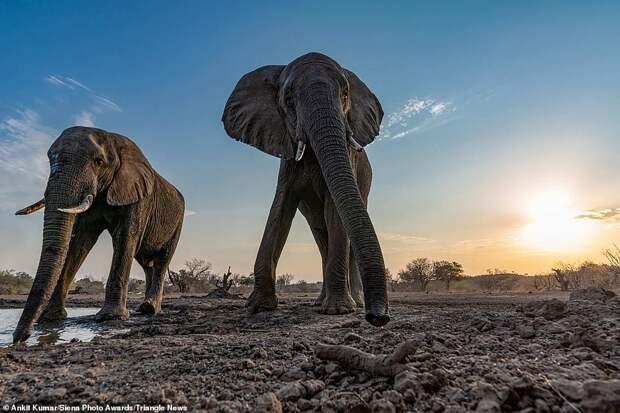 20 потрясающих фотографий отпобедителей конкурса Siena International Photo Awards 2020