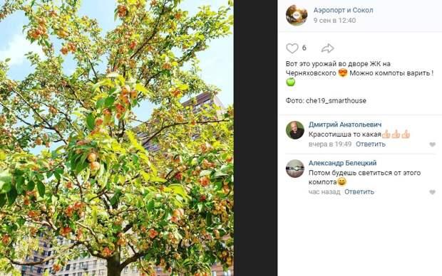 Фото дня: урожай яблок на Черняховского