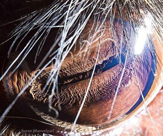 Зрачки животных с планеты Земля, выглядят именно так