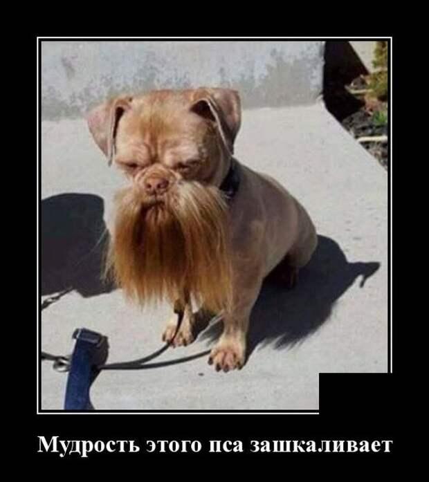 Демотиватор про пса