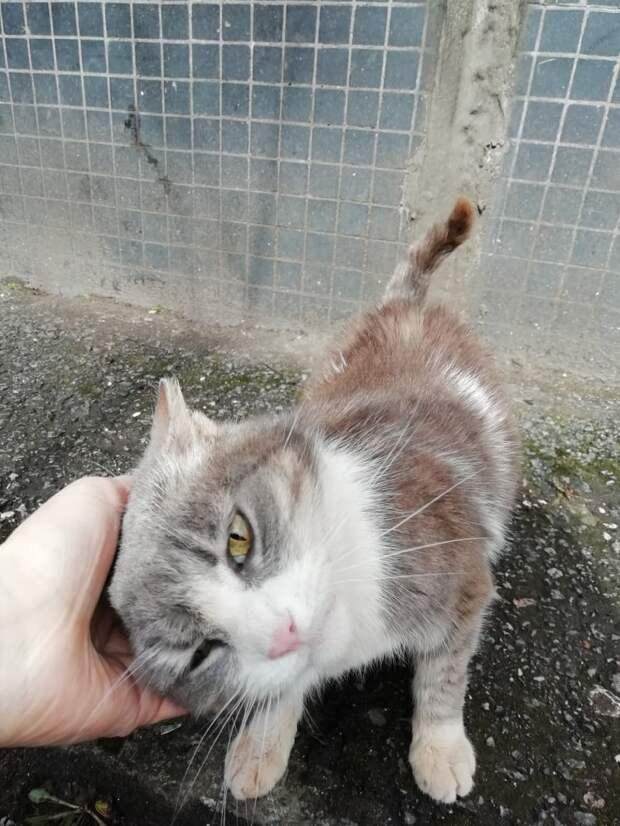Ищем Мусеньке не просто дом, а любящего и понимающего ЧЕЛОВЕКА, который сможет подарить пожилой кошечке вторую жизнь!