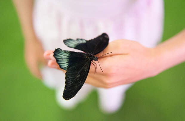 Помнят ли бабочки времена, когда были гусеницами?