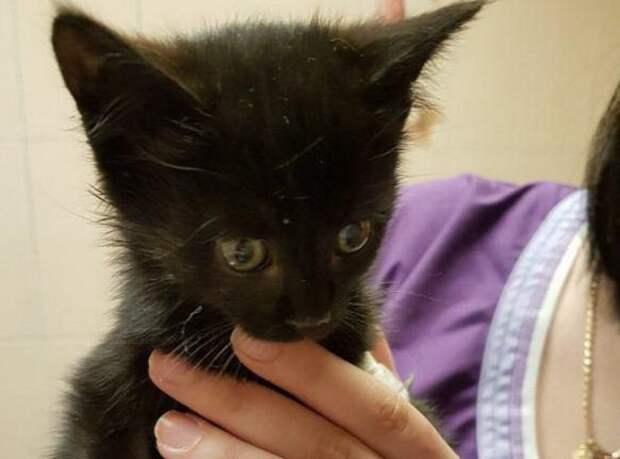В Севастополе девушка кинулась под колеса автомобиля и спасла котенку жизнь