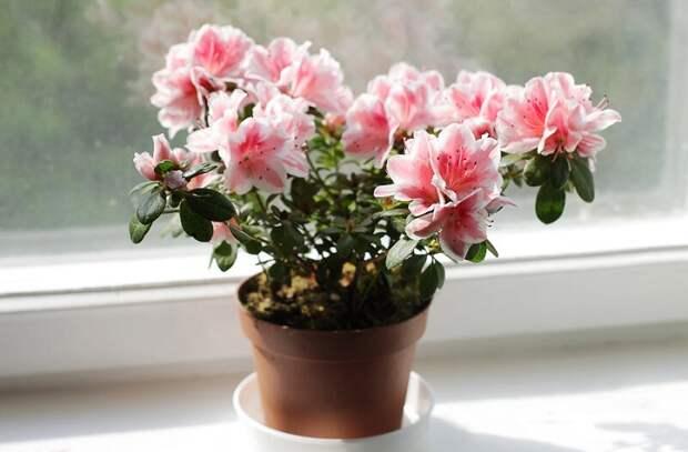 7 популярных и неприхотливых комнатных растений