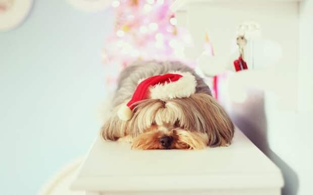 Как не испортить новогоднее настроение