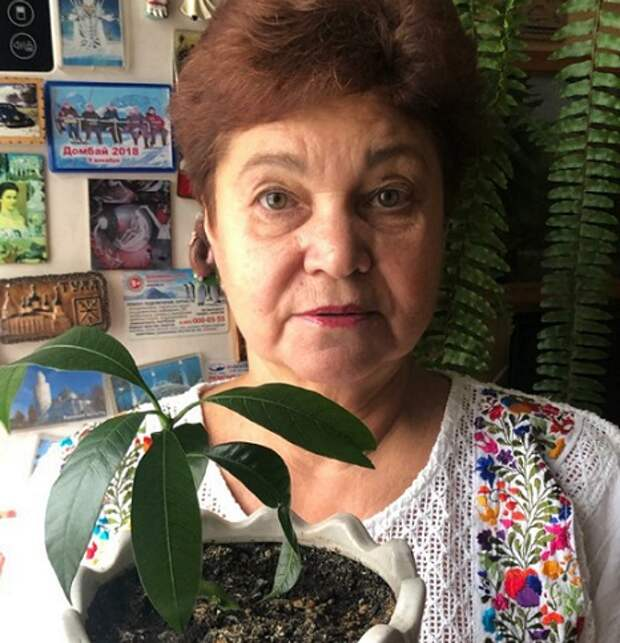 Пенсионерка из Отрадного затеяла дома эксперимент по выращиванию манго
