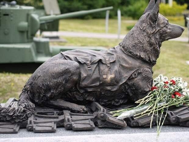 Джульбарс - пес, которого на Параде Победы несли на руках Джульбарс, парад победы, пес