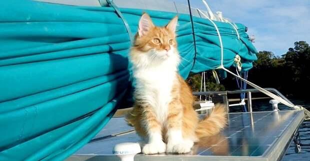 Коты и море